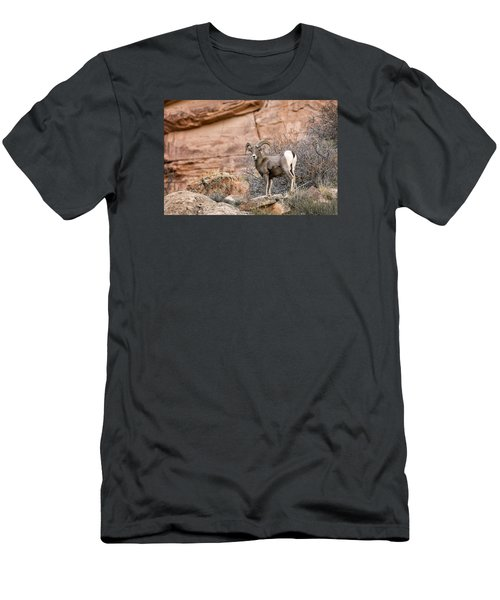Desert Bighorn Men's T-Shirt (Athletic Fit)