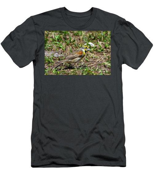Dickcissel Men's T-Shirt (Athletic Fit)