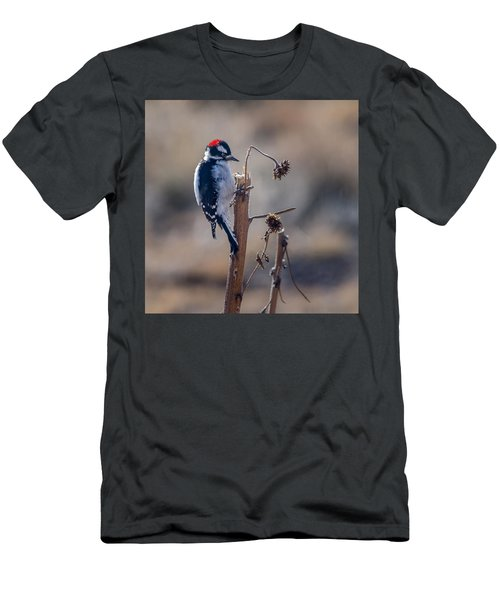 Downy Woodpecker Finding Insects From Sunflower Stem. Men's T-Shirt (Slim Fit) by John Brink