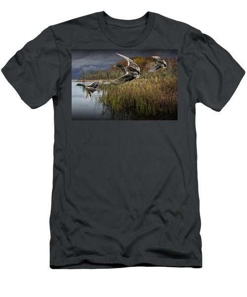 Drake Mallard Ducks Coming In For A Landing Men's T-Shirt (Athletic Fit)