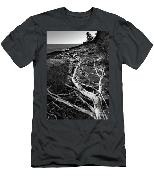 Driftwood Tree, La Verna Preserve, Bristol, Maine  -20999-30003 Men's T-Shirt (Athletic Fit)