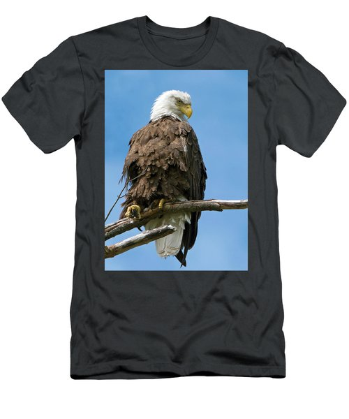 Eagle On Perch Men's T-Shirt (Athletic Fit)