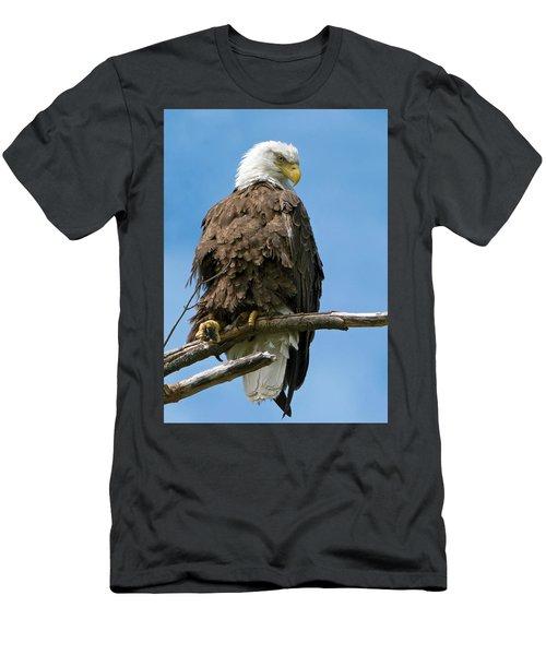 Eagle On Perch Men's T-Shirt (Athletic Fit)
