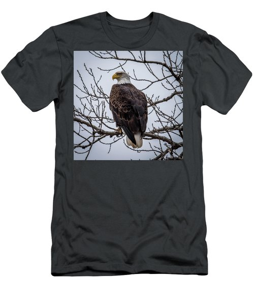 Men's T-Shirt (Slim Fit) featuring the photograph Eagle Perched by Paul Freidlund