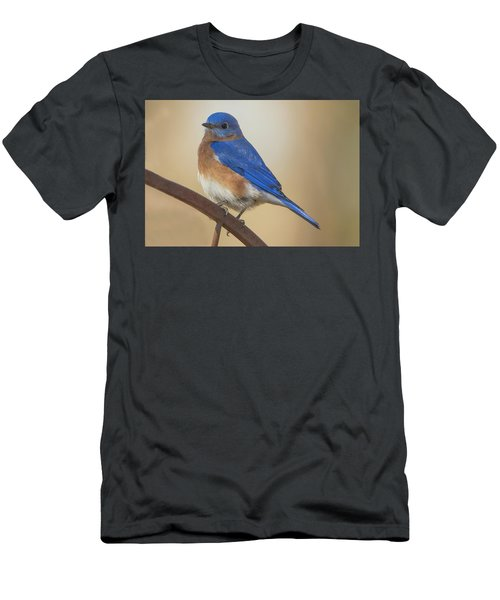 Eastern Blue Bird Male Men's T-Shirt (Athletic Fit)