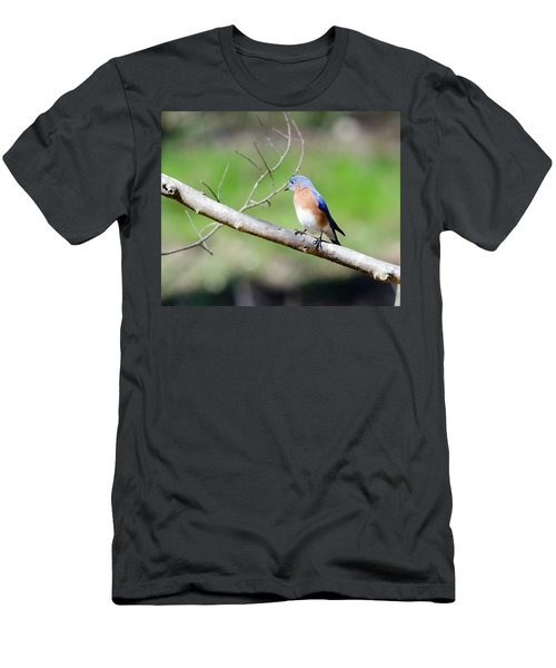 Eastern Bluebird Men's T-Shirt (Slim Fit) by George Randy Bass