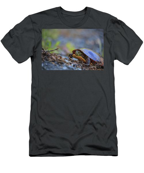 Eastern Painted Turtle Chrysemys Picta Men's T-Shirt (Athletic Fit)