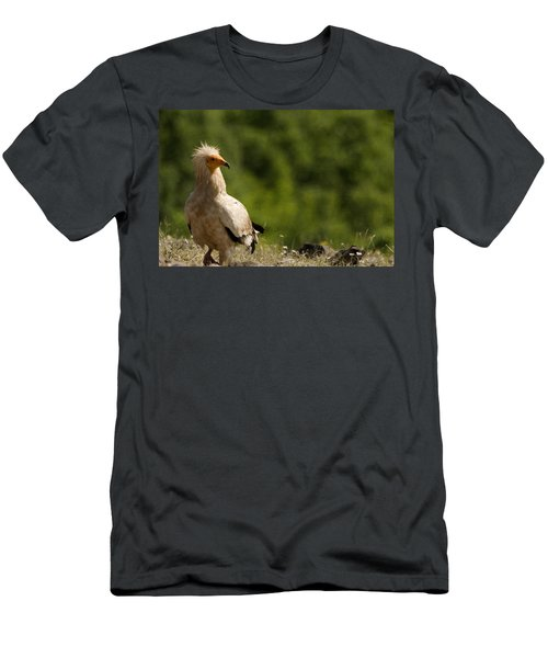 Egyptain Vulture  Men's T-Shirt (Athletic Fit)