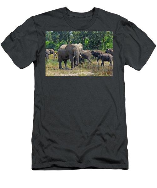 Elephants 3 Men's T-Shirt (Athletic Fit)