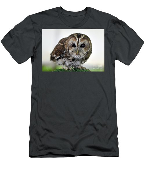 Eurasian Tawny Owl Men's T-Shirt (Athletic Fit)