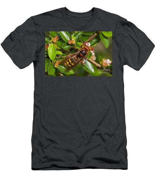 European Hornet Men's T-Shirt (Athletic Fit)