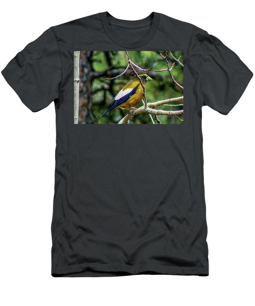 Evening Grosbeak On Aspen Men's T-Shirt (Athletic Fit)