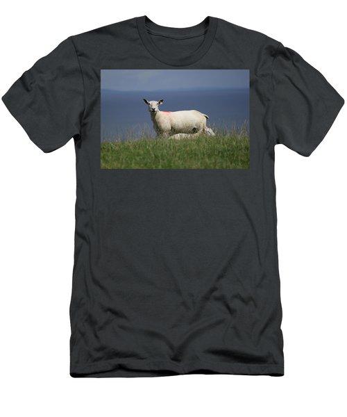 Ewe Guarding Lamb Men's T-Shirt (Athletic Fit)