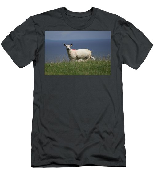 Ewe Guarding Lamb Men's T-Shirt (Athletic Fit)