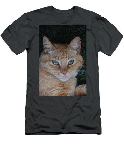Fat Cats Of Ballard 5 Men's T-Shirt (Athletic Fit)