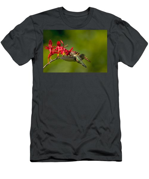 Feeding Hummer Men's T-Shirt (Athletic Fit)