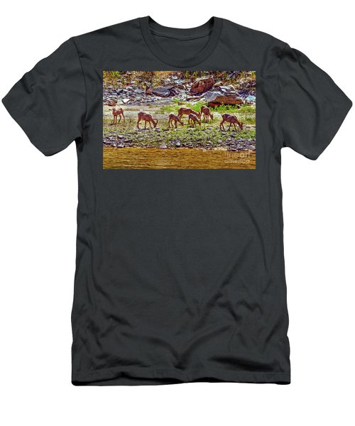 Feeding Mountain Sheep Men's T-Shirt (Athletic Fit)