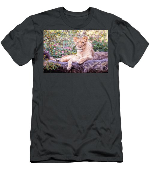Female Lion Resting Men's T-Shirt (Slim Fit) by Stephanie Hayes