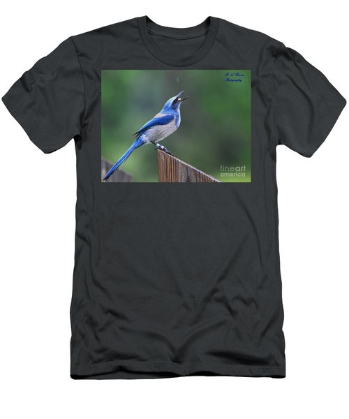Florida Scrub Jay Eating Men's T-Shirt (Athletic Fit)