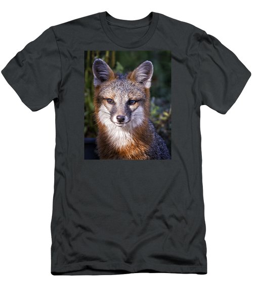 Men's T-Shirt (Slim Fit) featuring the photograph Fox Gaze by Alan Raasch