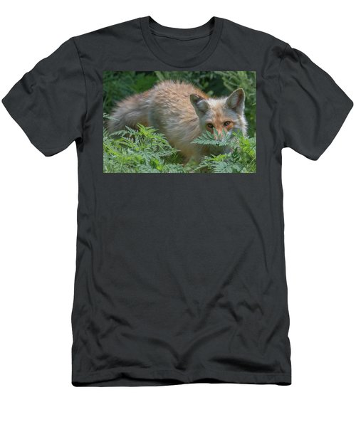 Fox In The Ferns Men's T-Shirt (Athletic Fit)