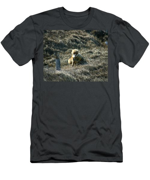 Fox In The Wind Men's T-Shirt (Athletic Fit)