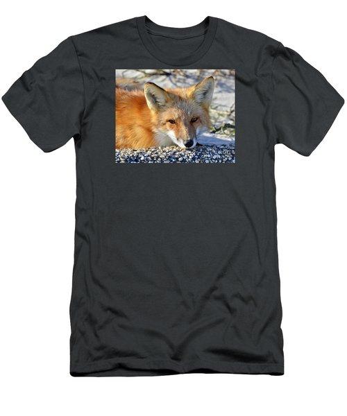 Fox Posing For Me Men's T-Shirt (Slim Fit) by Sami Martin