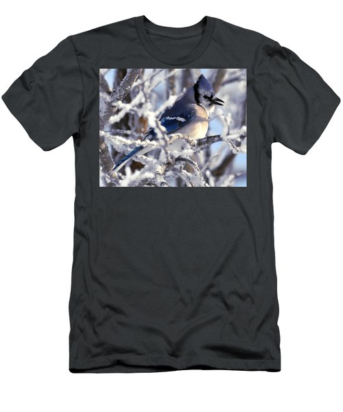 Frosty Morning Blue Jay Men's T-Shirt (Athletic Fit)
