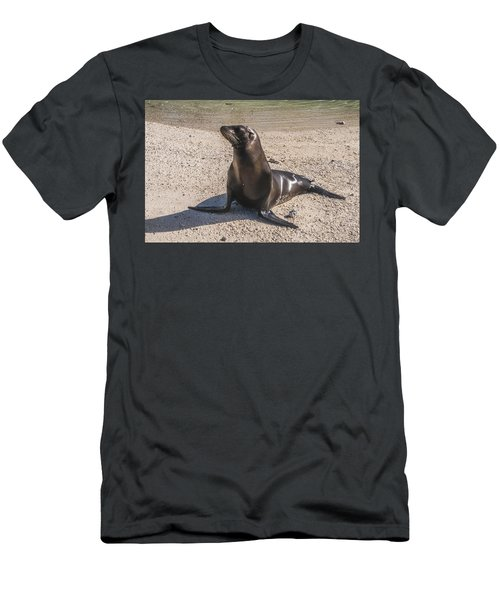 Galapagos Sea Lion Men's T-Shirt (Athletic Fit)