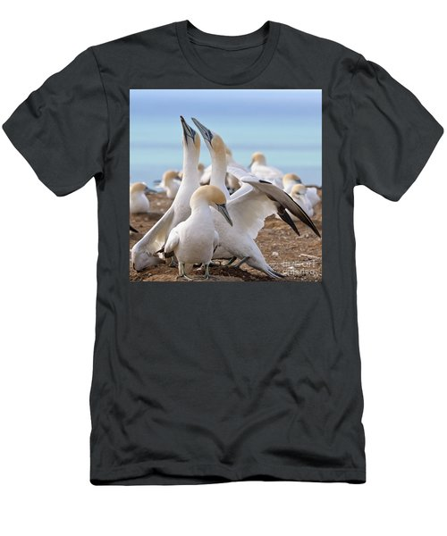 Gannets Men's T-Shirt (Slim Fit) by Werner Padarin