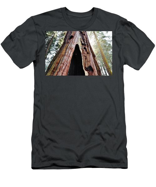 Giant Forest Giant Sequoia Men's T-Shirt (Athletic Fit)