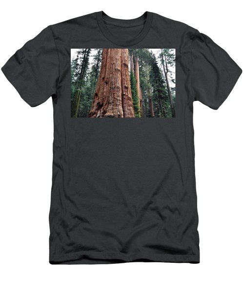 Men's T-Shirt (Slim Fit) featuring the photograph Giant Sequoia II by Kyle Hanson