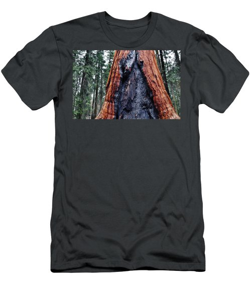 Men's T-Shirt (Slim Fit) featuring the photograph Giant Sequoia by Kyle Hanson