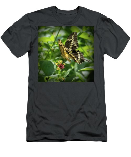 Giant Swallowtail On Lantana Men's T-Shirt (Athletic Fit)