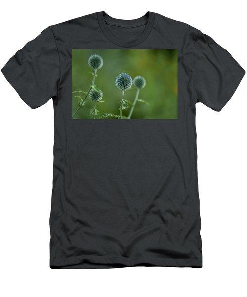 Globe Thistles Echinops Men's T-Shirt (Athletic Fit)