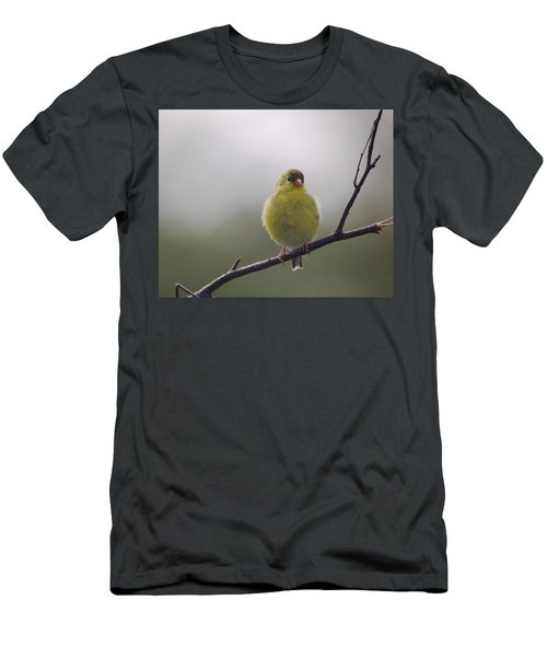 Men's T-Shirt (Slim Fit) featuring the photograph Goldfinch Puffball by Susan Capuano