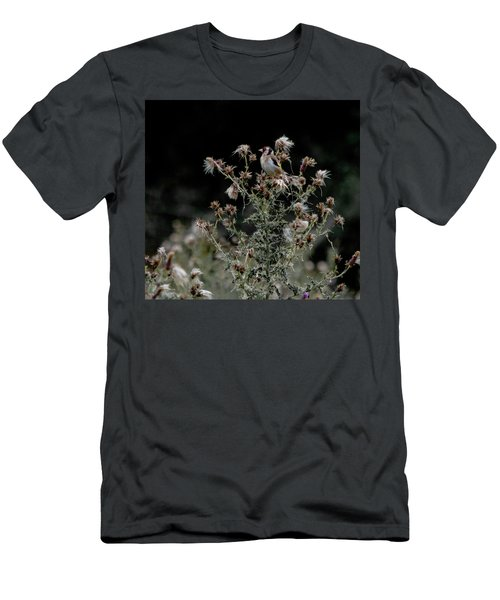 Goldfinch Sitting On A Thistle Men's T-Shirt (Athletic Fit)