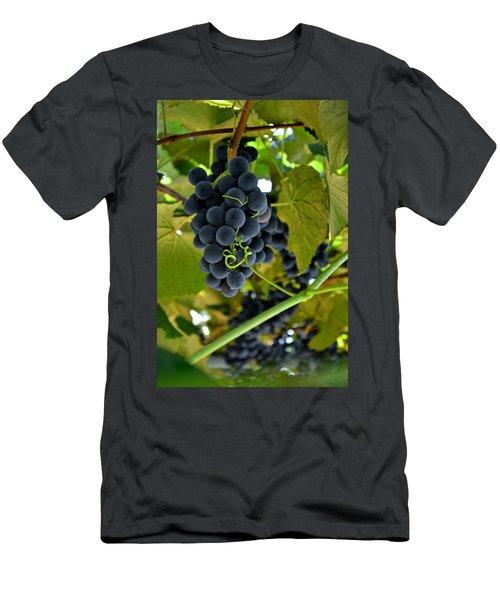 Grape Arbor 2 Men's T-Shirt (Athletic Fit)