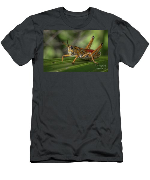 Grasshopper And Palm Frond Men's T-Shirt (Athletic Fit)