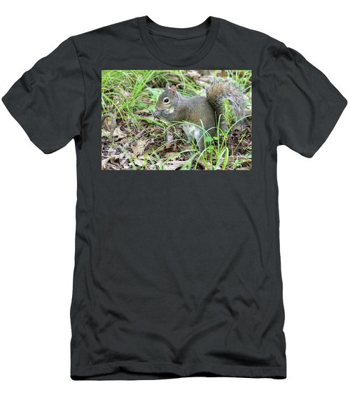 Gray Squirrel Eating Men's T-Shirt (Athletic Fit)