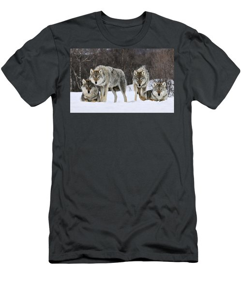 Men's T-Shirt (Athletic Fit) featuring the photograph Gray Wolves Norway by Jasper Doest