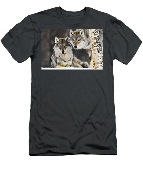 Men's T-Shirt (Athletic Fit) featuring the photograph Gray Wolf Canis Lupus Pair In The Snow by Jasper Doest