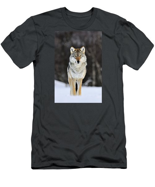 Men's T-Shirt (Athletic Fit) featuring the photograph Gray Wolf In The Snow by Jasper Doest