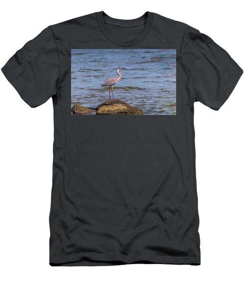 Great Blue Heron Gaze Men's T-Shirt (Athletic Fit)