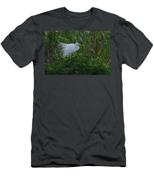 Great Egret Displays Windy Plumage Men's T-Shirt (Athletic Fit)