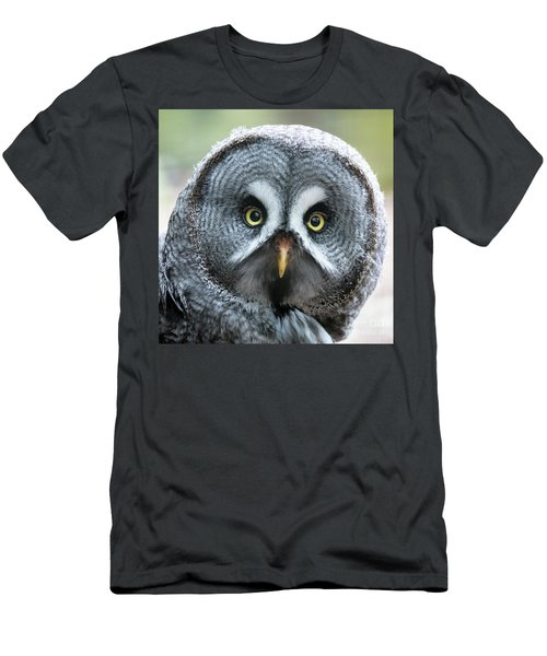 Great Grey Owl Closeup Men's T-Shirt (Athletic Fit)