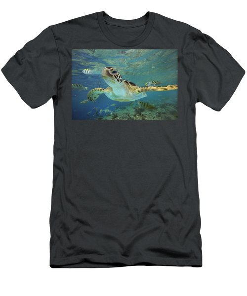 Green Sea Turtle Chelonia Mydas Men's T-Shirt (Athletic Fit)