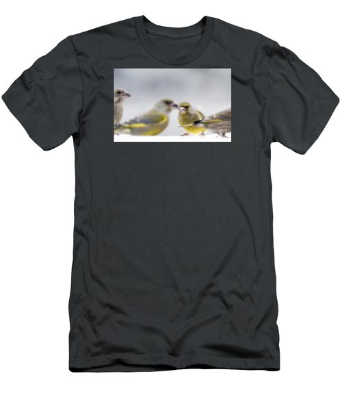 Greenfinches Men's T-Shirt (Athletic Fit)