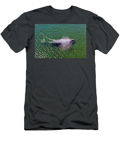 Grey Whale Men's T-Shirt (Athletic Fit)