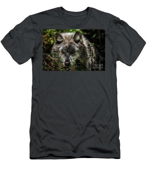 Grey Wolf Men's T-Shirt (Slim Fit) by Brad Allen Fine Art